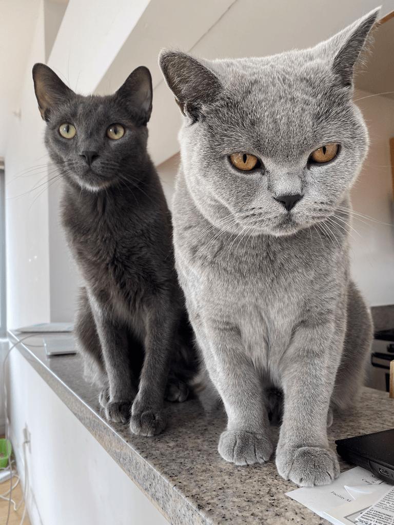 clickup cats